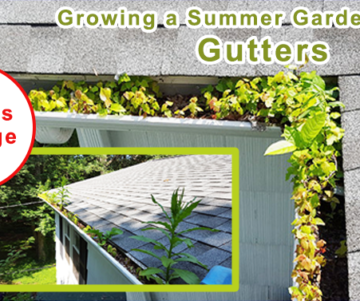 Summer Gutter Cleaning, Burnley, Blackburn, Lancashire